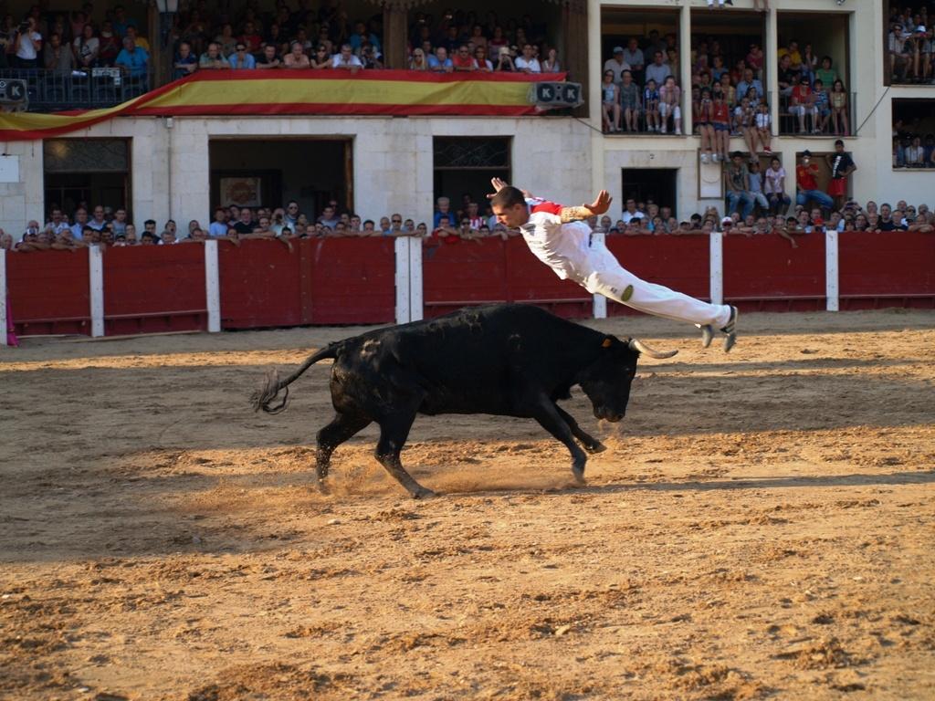 Concurso de Cortes en Peñafiel (Valladolid)