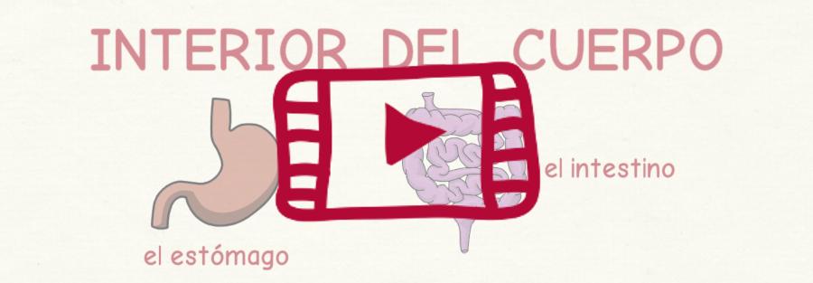 Vídeo con el vocabulario en español del interior del cuerpo humano